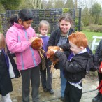 Pupils with chickens learning about Real Food in Wythenshawe Park